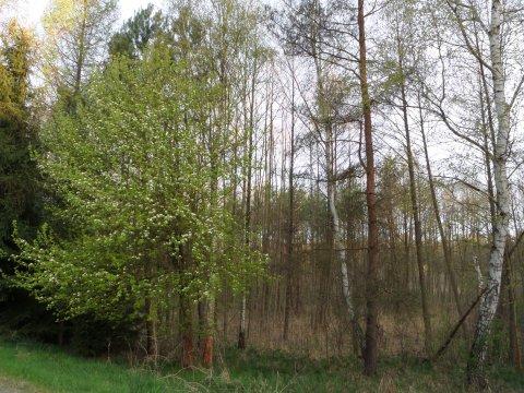 wiosne w lesie